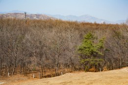 The white markers in the grass show where North Koreans may not travel past. This is an area within the buffer zone of the DMZ.